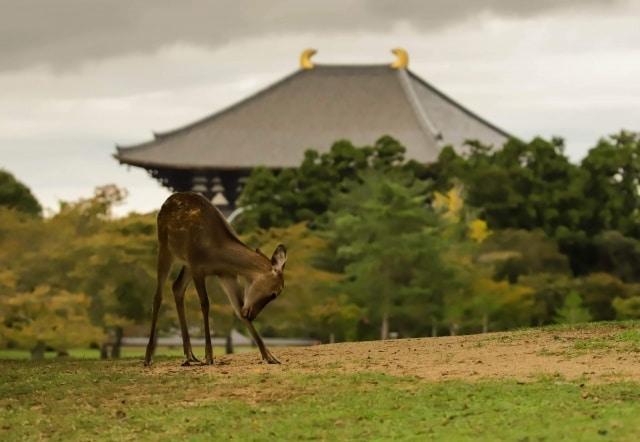 奈良県の特徴